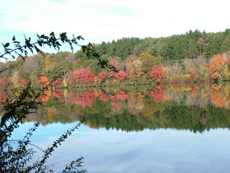 fall foliage near water